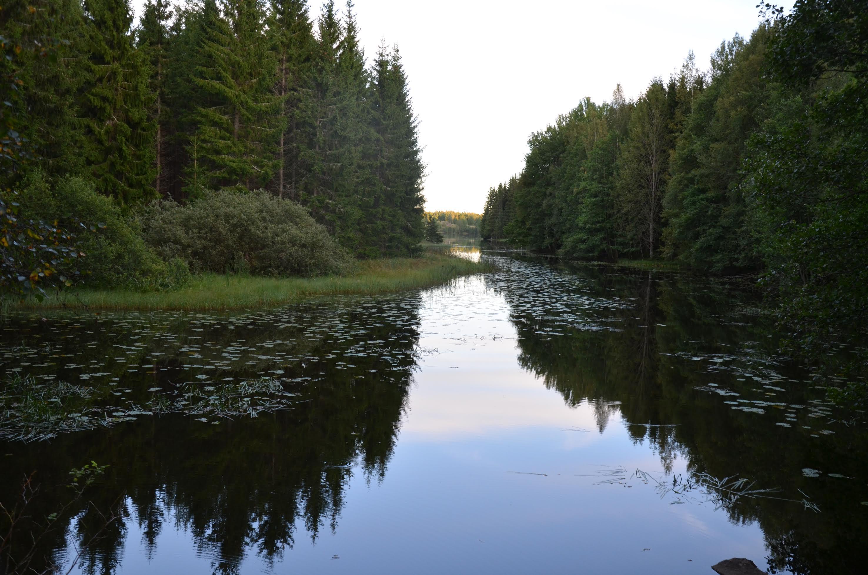 Tretorp skog Odensvi